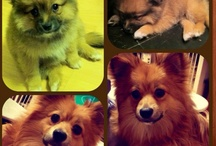 My pets and other animals