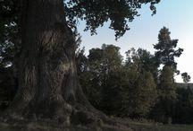 Natur / Ab in den Wald! Schnapp euch euren Hund und geht raus in den Wald! Egal ob mit Wanderschuhen oderdem Mountain Bike - im Wald ist es doch am schönsten!