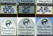 umor veterinar