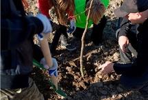 Posadź drzewko z Kronopolem! :) / 5 godzin wytężonej pracy, 670 sadzonek i 1000 kg śmieci...