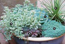 Plants etc