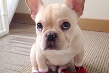 Puppies wearing socks!