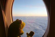 Kermit xd