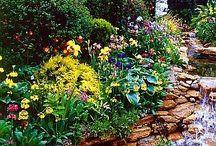 Yard/Garden / by Jen Earp