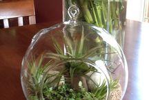 Terrarium Gardening / Beautiful and unique ideas for terrarium gardening.