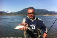 Trout Fishing on the Harrison River