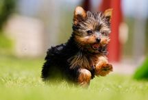Puppies! / by Jamie Wilson