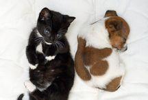 cățeluşi  și pisicuțe
