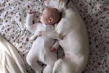 Puppys