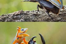 Animal Kingdom / Beautiful photos of beautiful animals. And some facts about them.