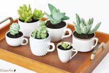 Cactus en una charola