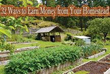 homesteading plans and money stuff / plans