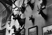 Hunting Trophies / #Hunting #Trophies, beautiful hunting #mounts