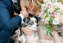 Wedding Pets / Ways to include your pet in your wedding