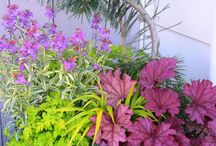 Great container combos / Container gardens that shine design-wise.