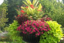 Container gardening / by Katherine Gaynor