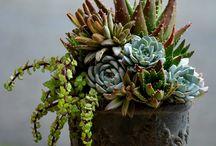 Planted designs
