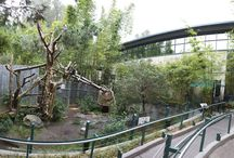 Zoo Design / Projects and exhibits at the San Diego Zoo and San Diego Wild Animal Park