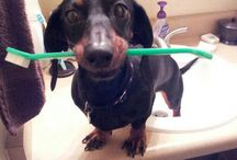 Dental Care for Your Pets