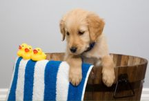 Our Puppy Guide / by Joy Fandal