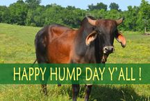 Happy Hump Day Y'all / by C-A-L Ranch Stores
