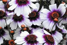 Fascinating flowers / by wilma beach