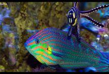 Profundo azul / animais marinhos e seus encantos
