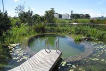 EcoPools - Natural Swimming Pools
