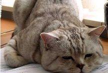 gatti belli