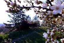 Spring / A tavasz reményteljes, a nyár büszke, az ősz alázatos, a tél ellenálló. <3  Cecelia Ahern