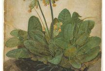 Kevätesikko