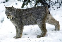 Animals of the West / by Western Resource Advocates