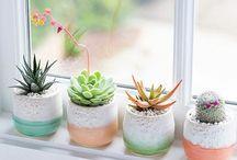 Plantas de decoração
