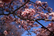 ❁ Blossom ❁