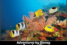 Adventures by Disney - Asia, Africa & Australia Vacations / These guided tours with two adventure guides make for unforgettable bucket list worthy adventures. Experience a luxury travel vacation for your whole family with VIP experiences! Travel to Australia, Cambodia, China, Egypt, Vietnam, South Africa.