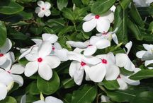 フラワー / 可愛いお花たち