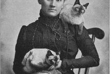 Siames & oriental cats