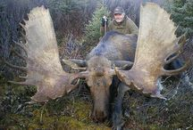 Moose / Moose