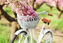 Vintage bikes with basket - my future transporting vehicle