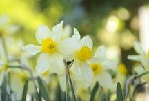 Betagende blomster