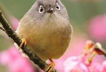 Exotic Birds / by Kathy Ni