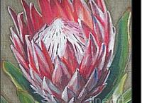protea canvas