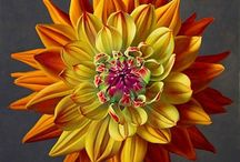 flowers / by Susan Spivey