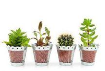 Giardinaggio / Consigli pratici sul giardinaggio