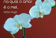 Frases | Quotes