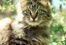 Cats / by Megan Mensch
