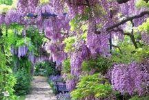 Gardening &a Landscape