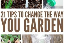 Garden Hints, Hacks And Ideas / Tips, Hints And Guides To Looking After The