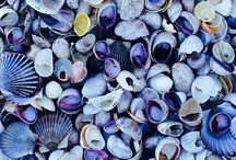 Shelling crafts