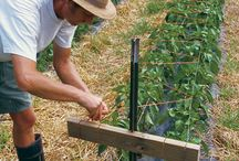 Pepper farming / All about growing peppers so that we can make our Tippsy Toppers pepper jellies with homegrown peppers.